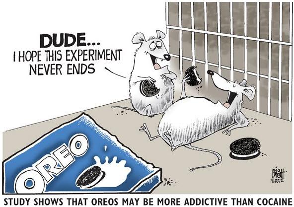 Sugar more addictive than cocaine